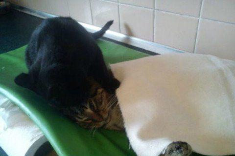 imgur velika maca spolni položaj crni
