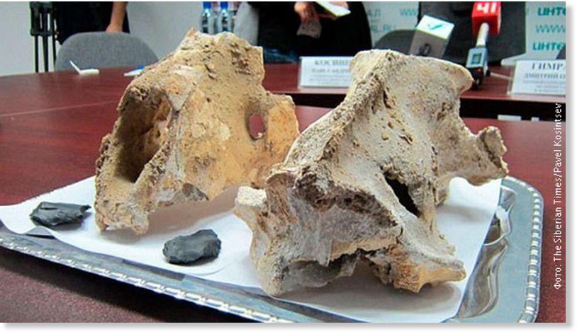 datiranje kostiju radiokarbona