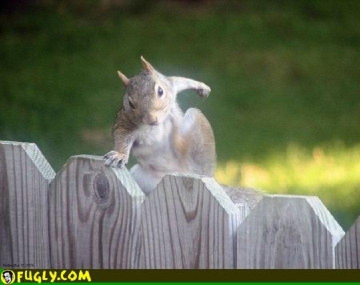 Divovska vjeverica