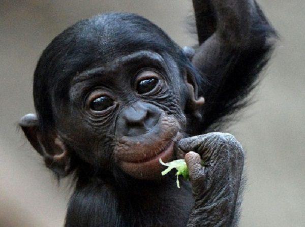 Majmuni izlazi