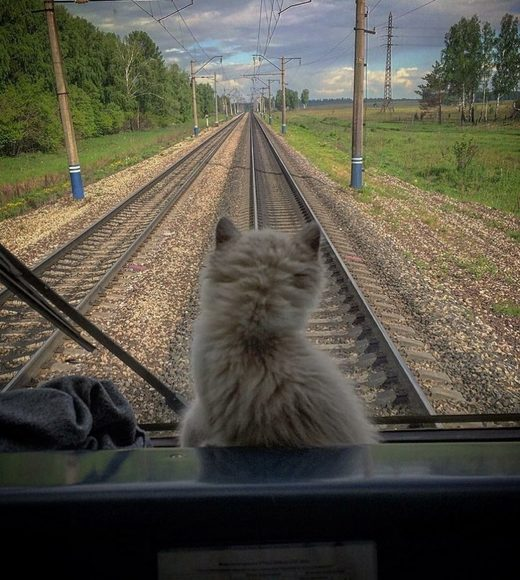 Cat train travel