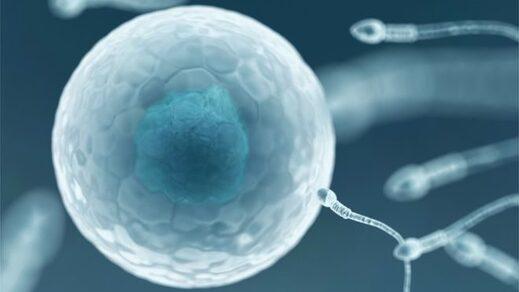 sperm egg