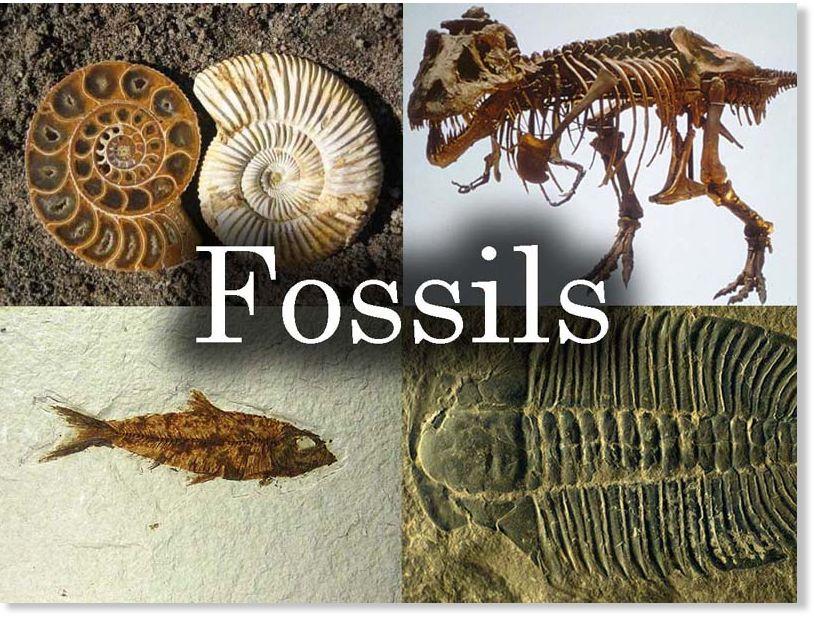 Laboratorijski osam datiranja fosila stijena i odgovor na geološke događaje